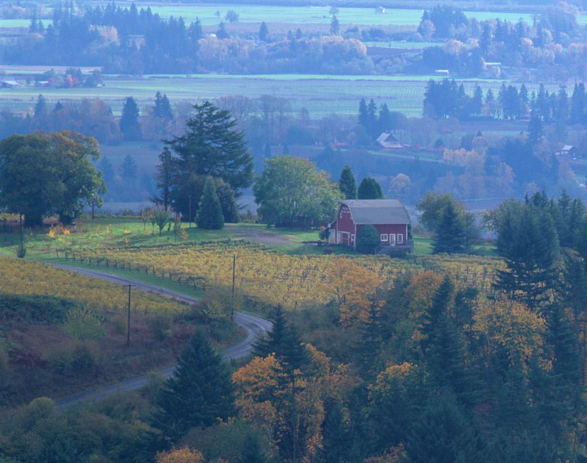 Willamette Wine
